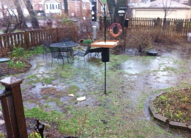 Drainage assistance for Backyard flooding solutions