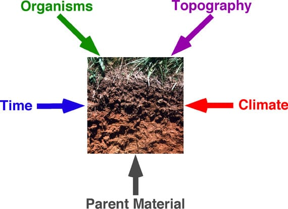 Blog archives for Soil factors